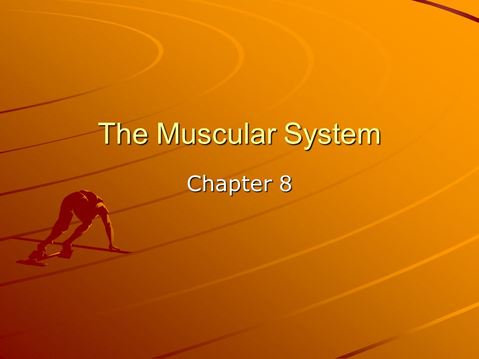 The Muscular System Chapter 8