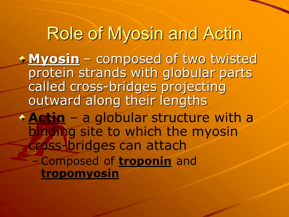 Role of Myosin and Actin