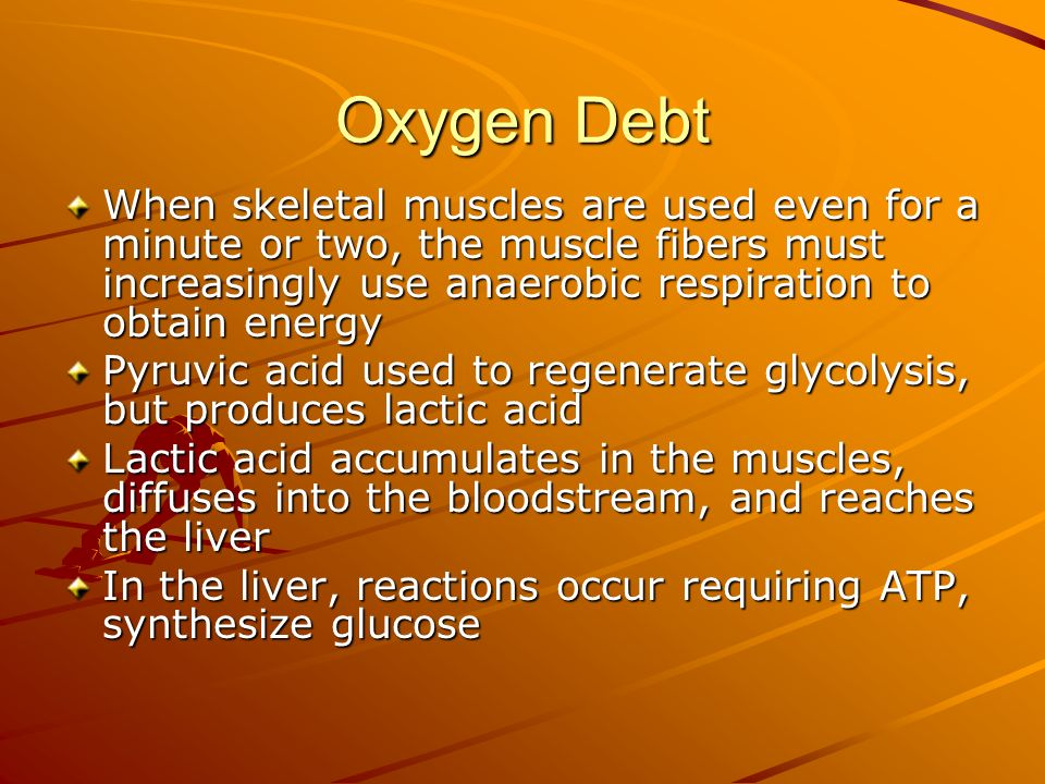Oxygen Debt When skeletal muscles are used even for a minute or two, the muscle fibers must increasingly use anaerobic respiration to obtain energy.