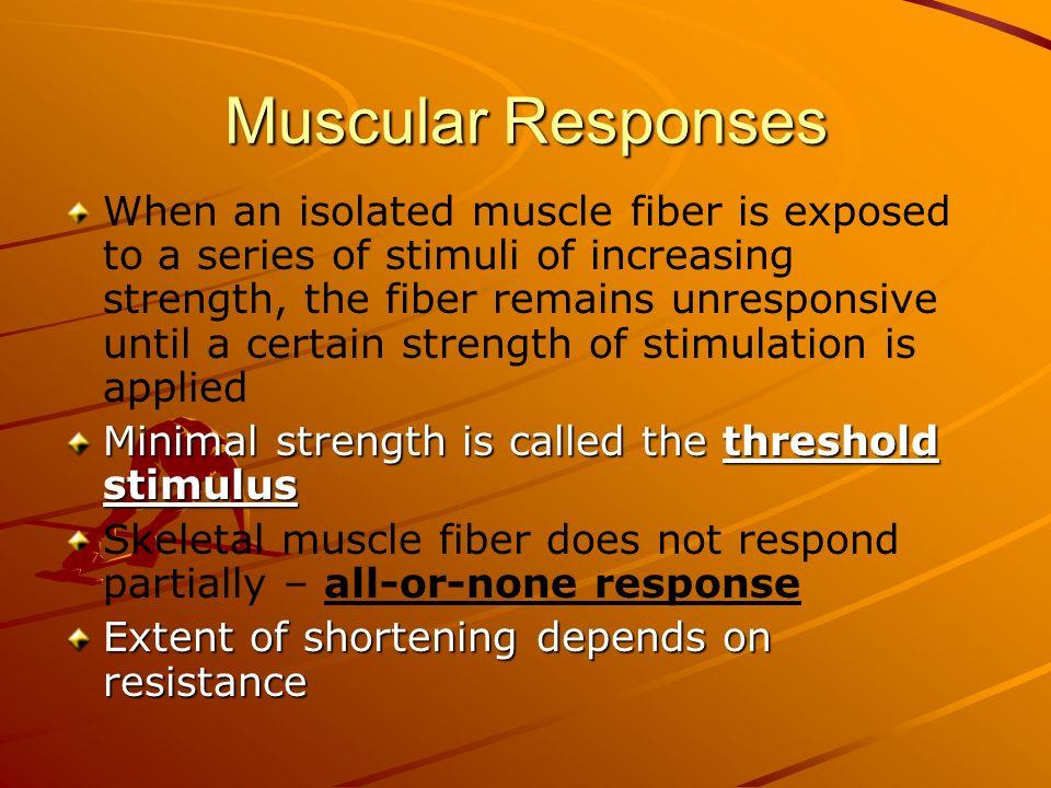 Muscular Responses