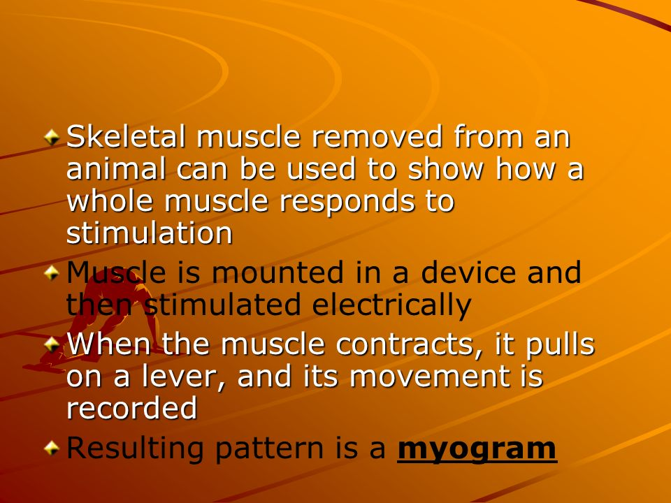 Skeletal muscle removed from an animal can be used to show how a whole muscle responds to stimulation