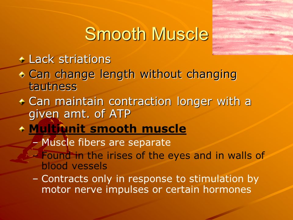 Smooth Muscle Lack striations