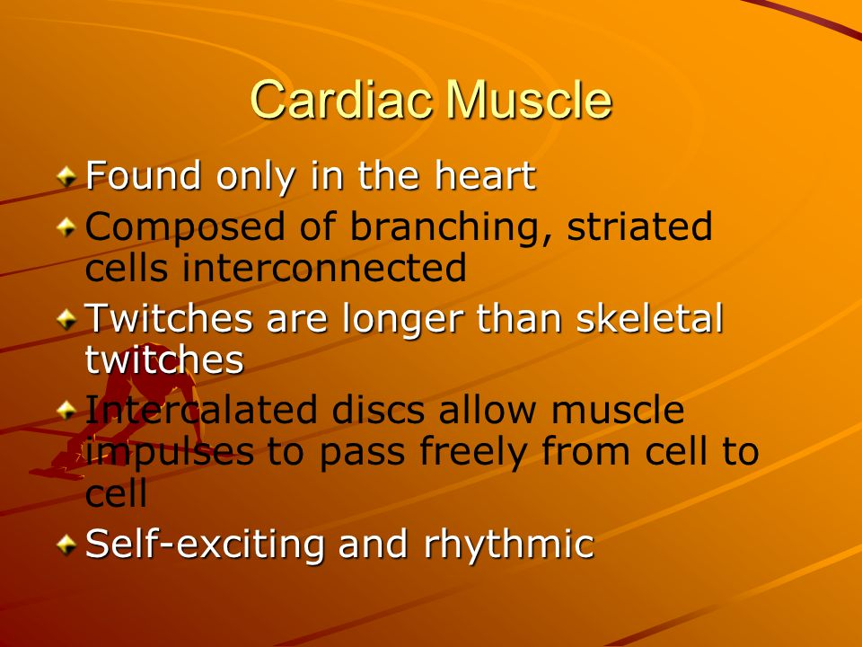 Cardiac Muscle Found only in the heart