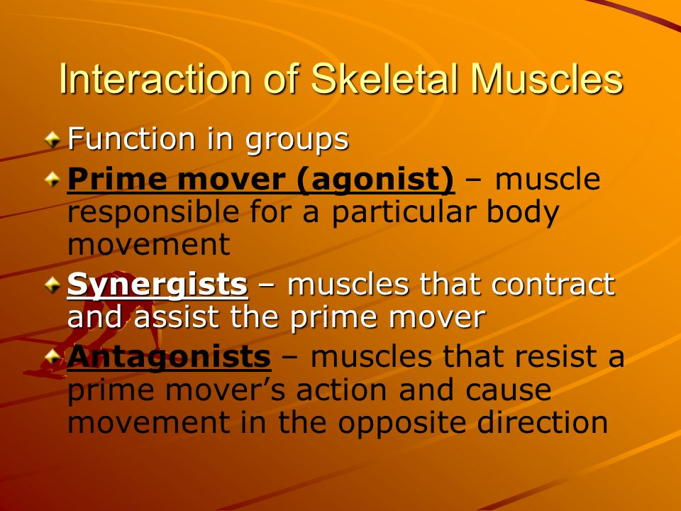 Interaction of Skeletal Muscles