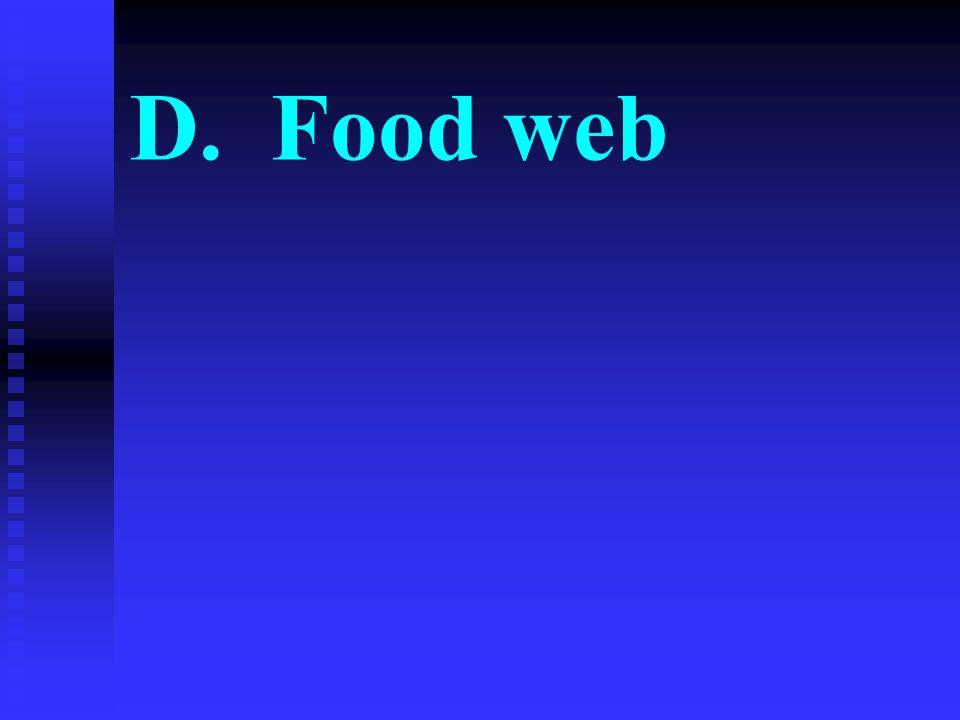 D. Food web