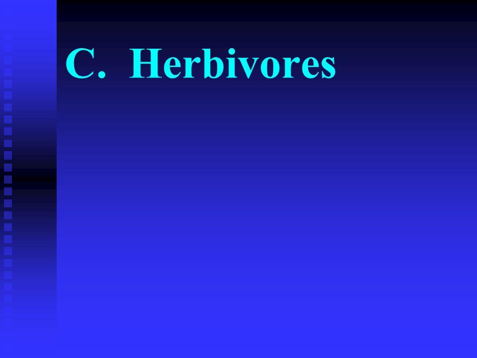 C. Herbivores