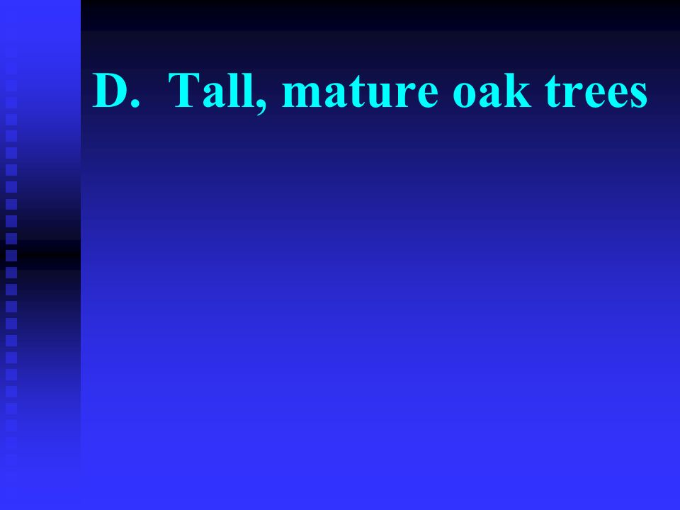 D. Tall, mature oak trees