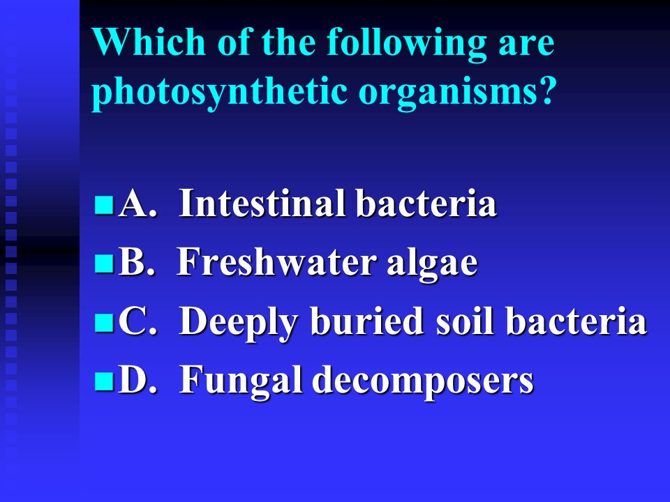Which of the following are photosynthetic organisms