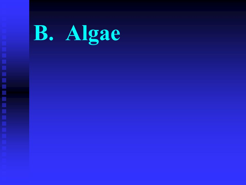 B. Algae