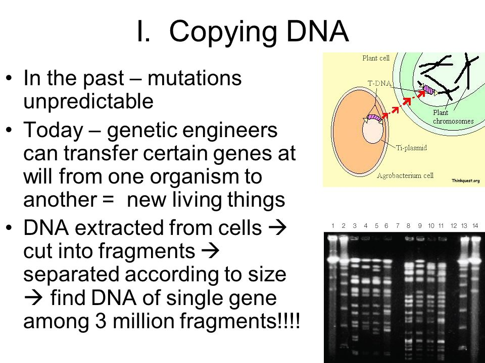 I. Copying DNA In the past – mutations unpredictable