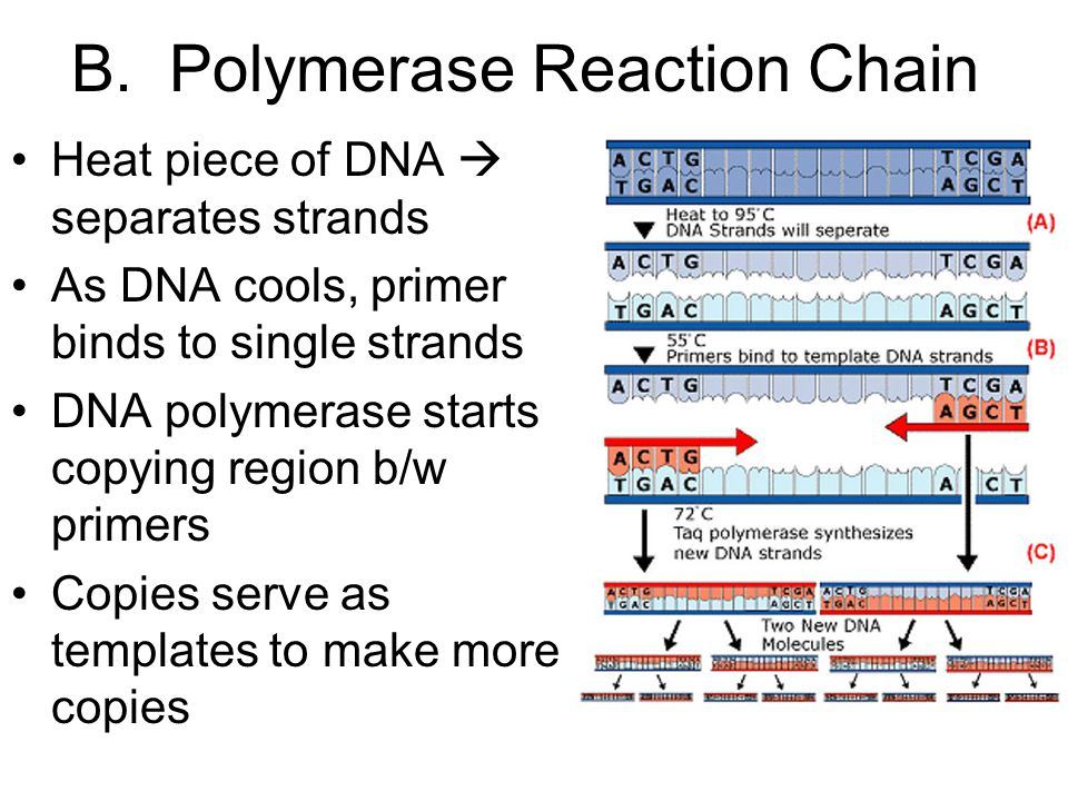 B. Polymerase Reaction Chain