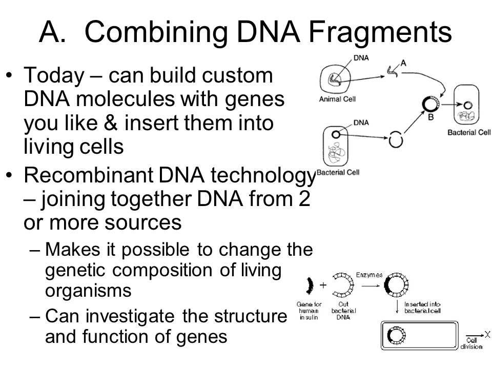 A. Combining DNA Fragments