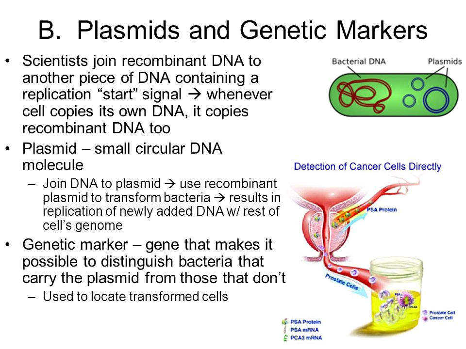 B. Plasmids and Genetic Markers