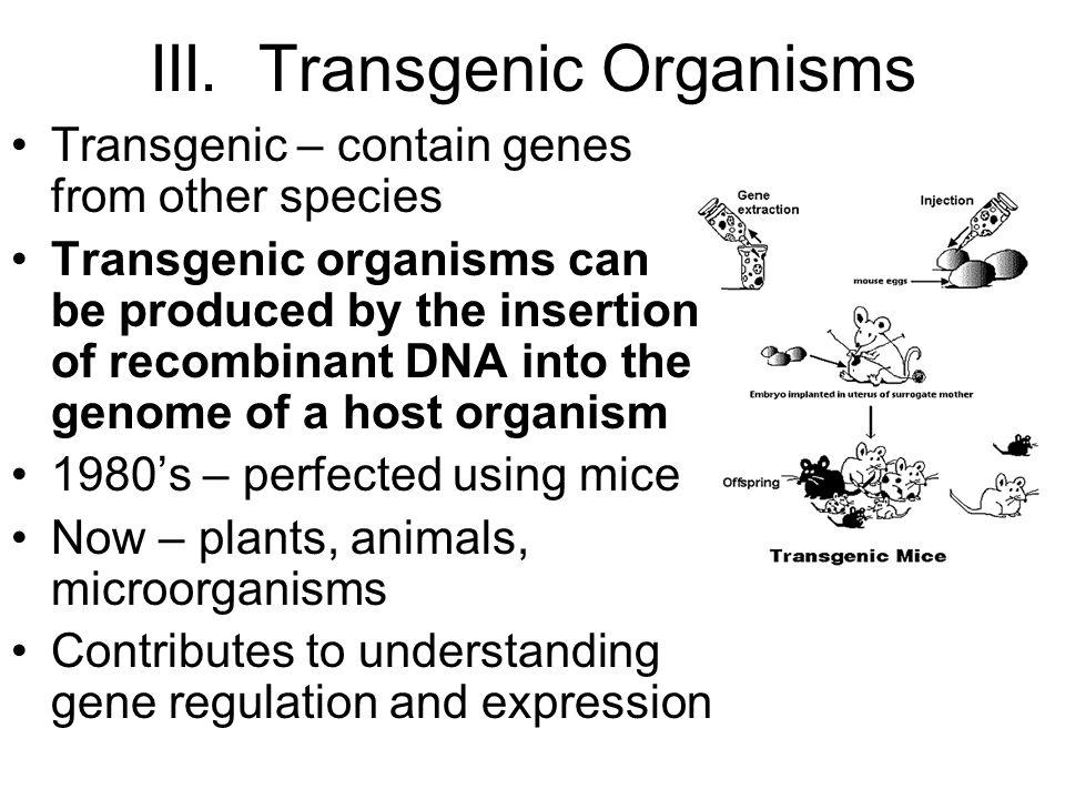 III. Transgenic Organisms
