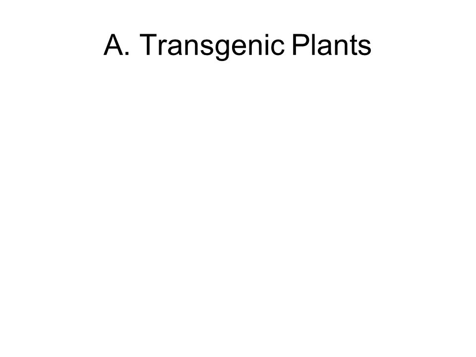 A. Transgenic Plants