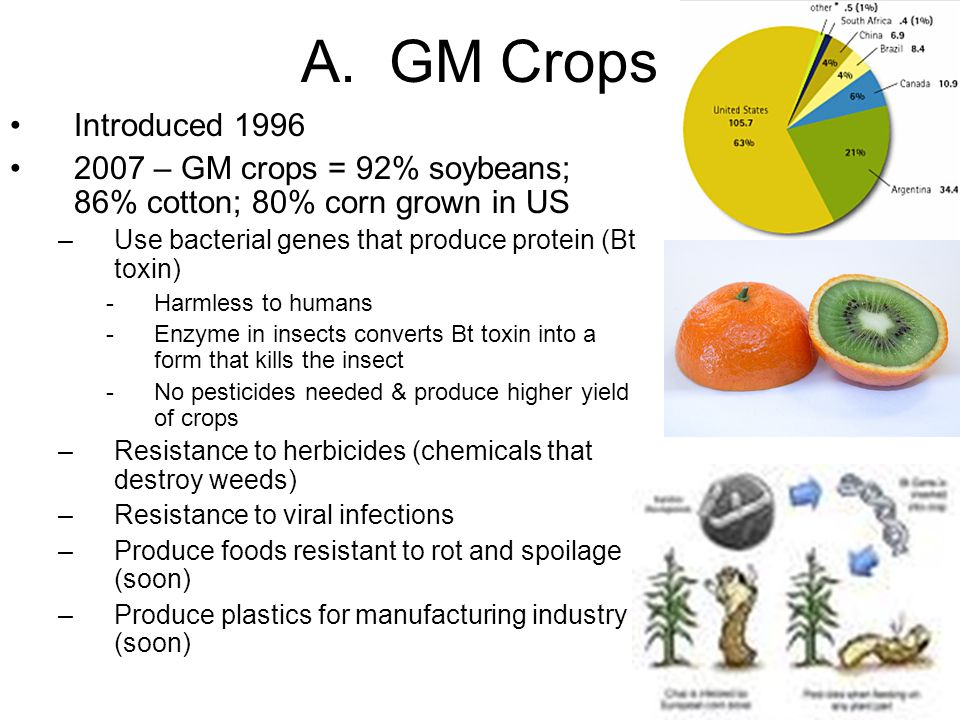 A. GM Crops Introduced 1996. 2007 – GM crops = 92% soybeans; 86% cotton; 80% corn grown in US. Use bacterial genes that produce protein (Bt toxin)