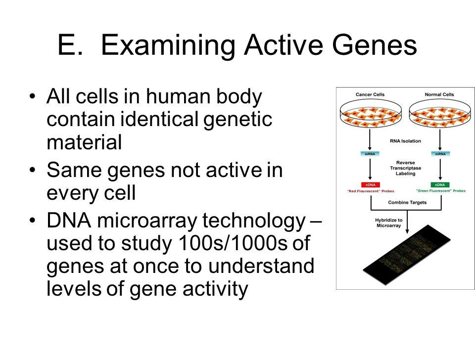 E. Examining Active Genes
