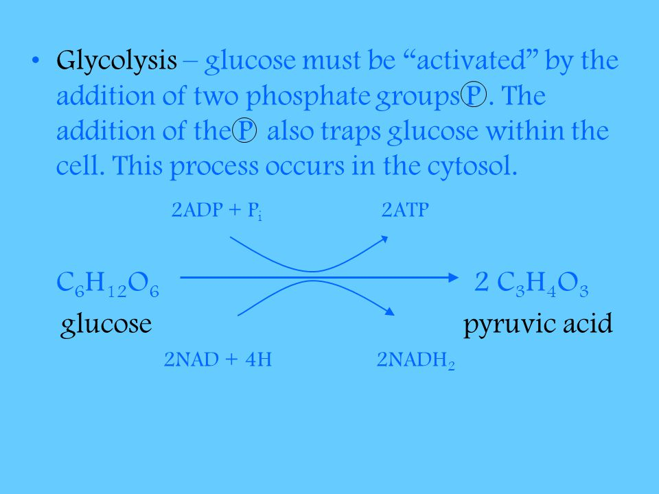 Glycolysis – glucose must be activated by the addition of two phosphate groups P . The addition of the P also traps glucose within the cell. This process occurs in the cytosol.
