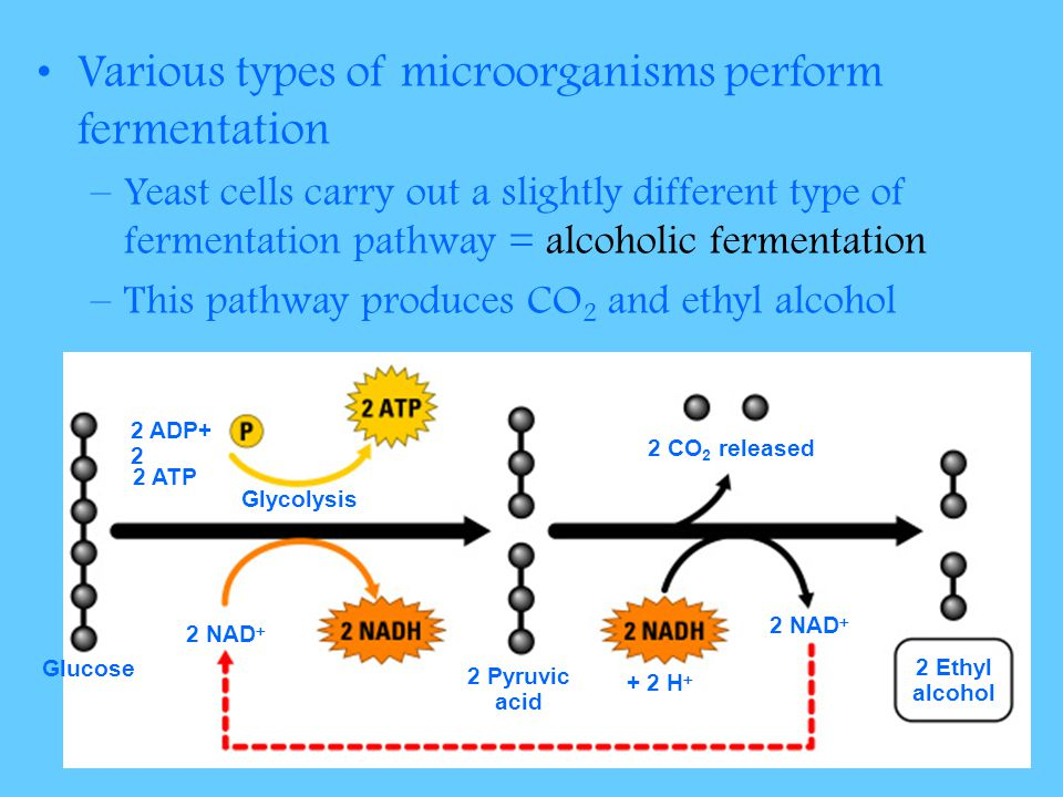 Various types of microorganisms perform fermentation