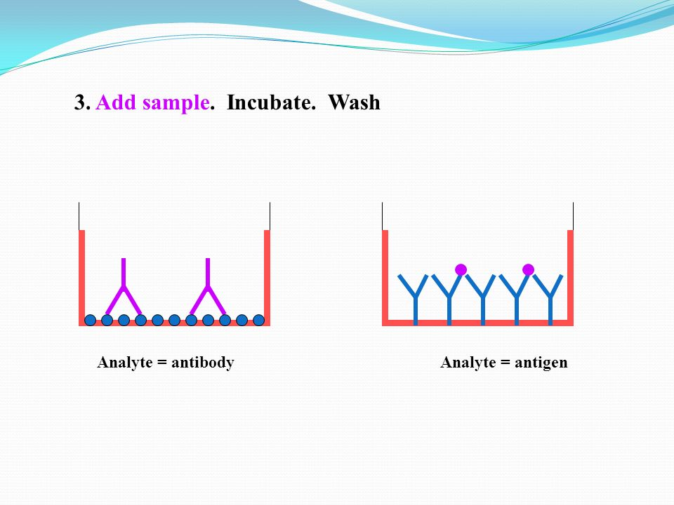 3. Add sample. Incubate. Wash