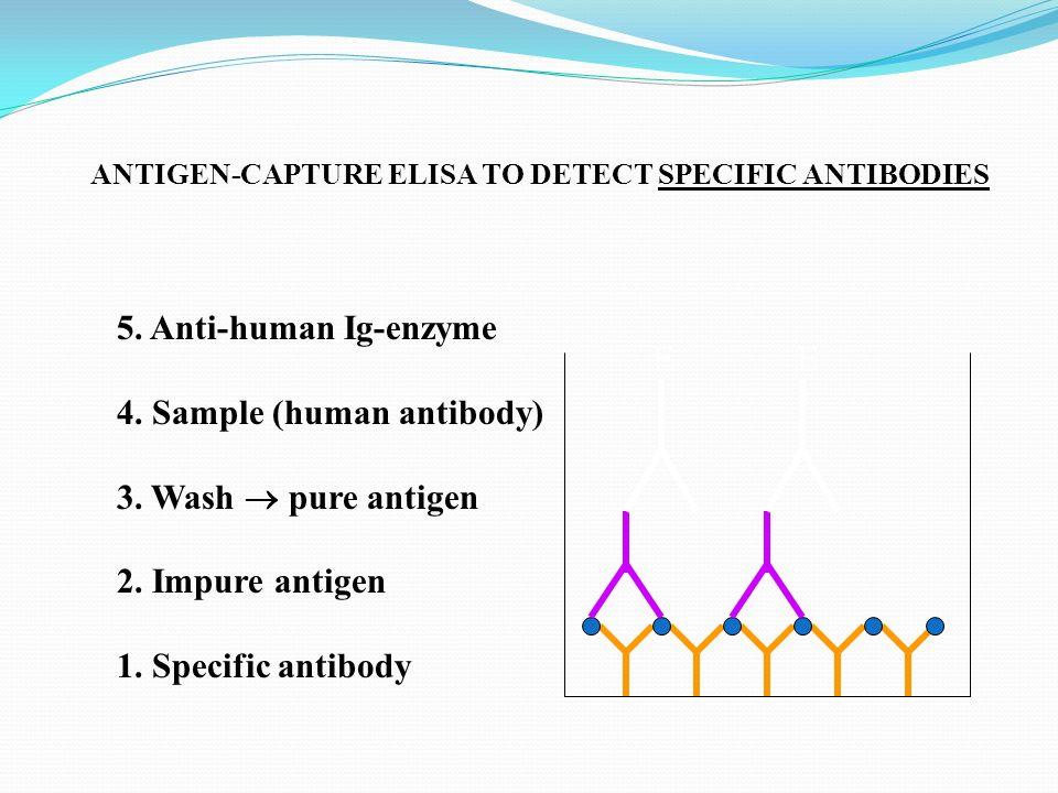 4. Sample (human antibody) 3. Wash  pure antigen 2. Impure antigen