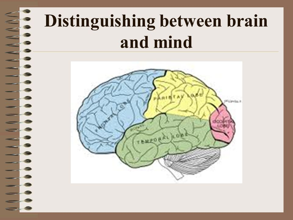Distinguishing between brain and mind