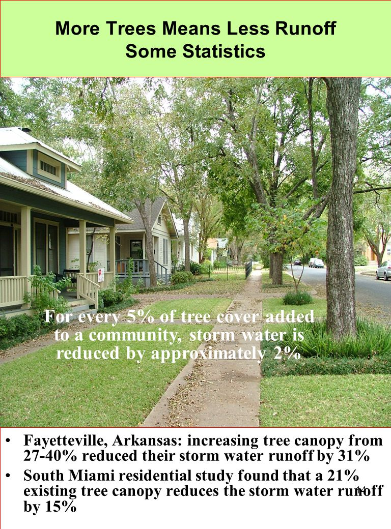More Trees Means Less Runoff Some Statistics