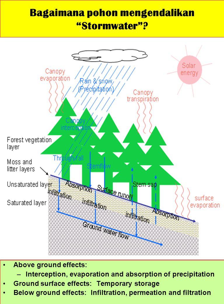 Bagaimana pohon mengendalikan Stormwater