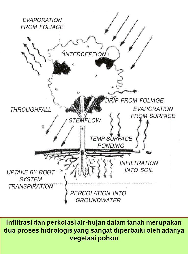 Infiltrasi dan perkolasi air-hujan dalam tanah merupakan dua proses hidrologis yang sangat diperbaiki oleh adanya vegetasi pohon