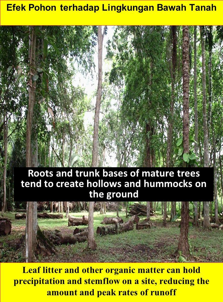 Efek Pohon terhadap Lingkungan Bawah Tanah