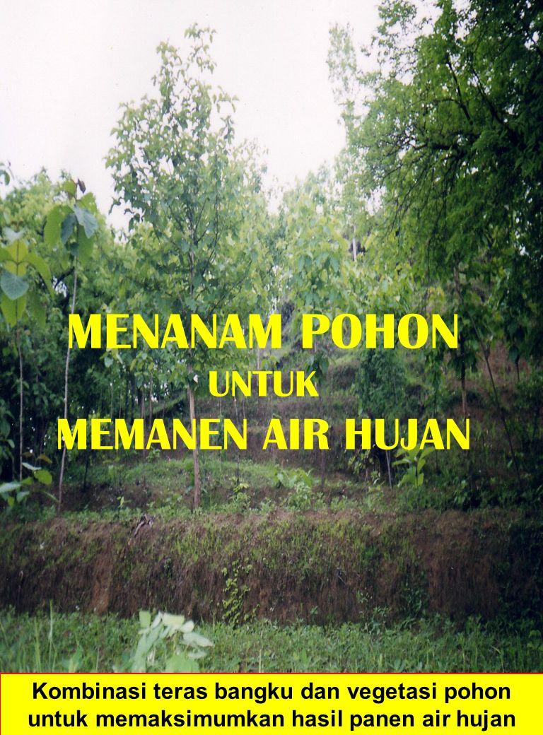MENANAM POHON UNTUK MEMANEN AIR HUJAN