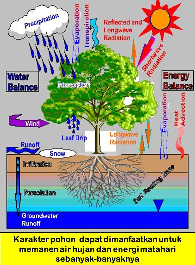 Karakter pohon dapat dimanfaatkan untuk memanen air hujan dan energi matahari sebanyak-banyaknya