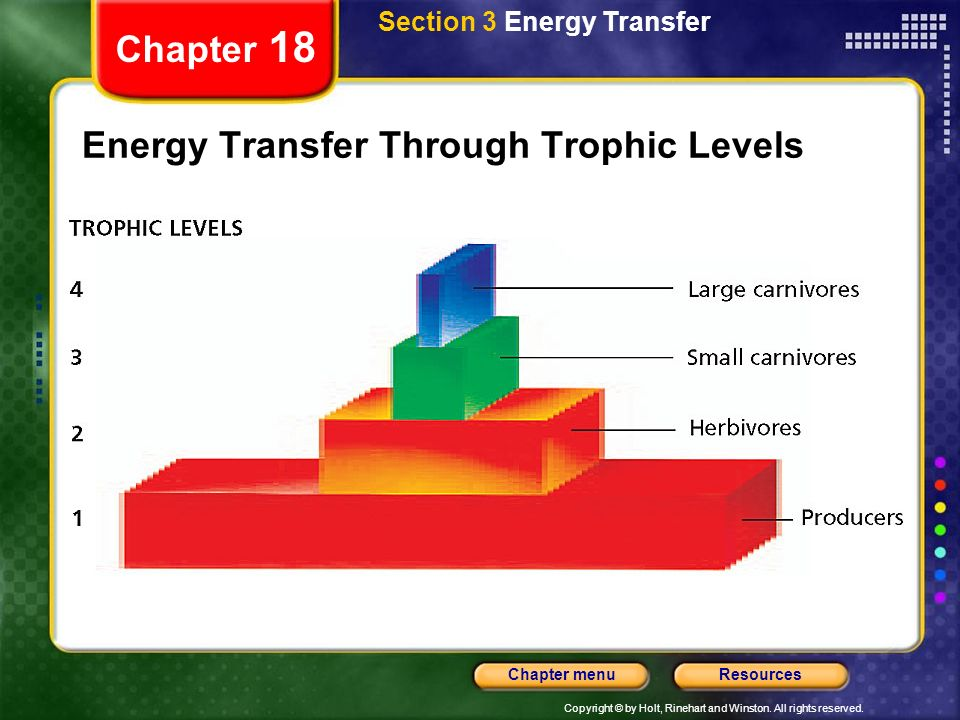 Energy Transfer Through Trophic Levels