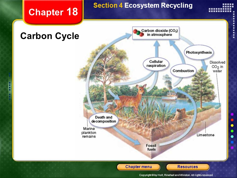 Section 4 Ecosystem Recycling