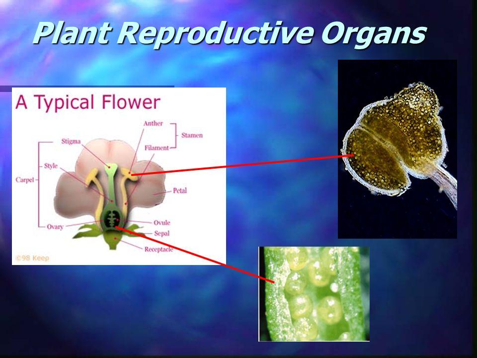 Plant Reproductive Organs