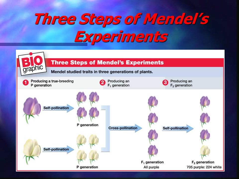 Three Steps of Mendel's Experiments