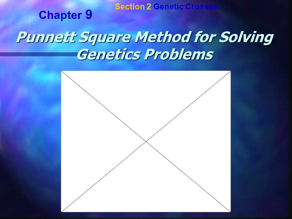 Punnett Square Method for Solving Genetics Problems