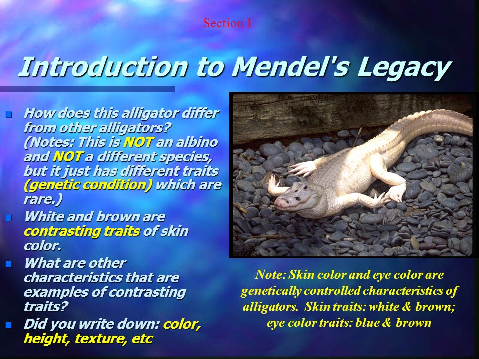 Introduction to Mendel s Legacy