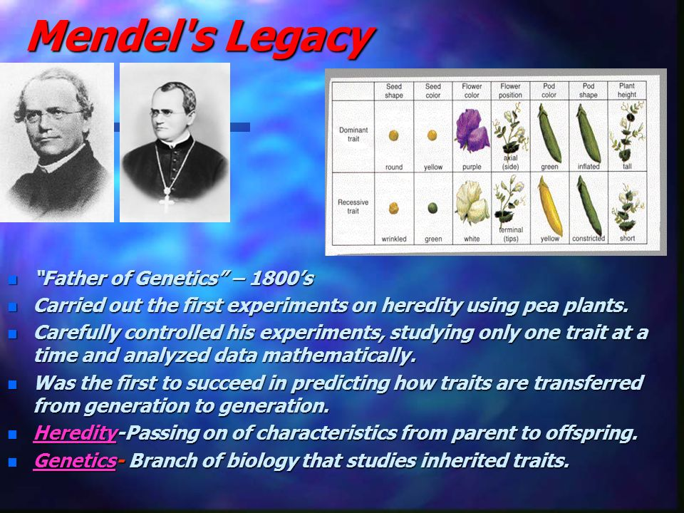 Mendel s Legacy Father of Genetics – 1800's