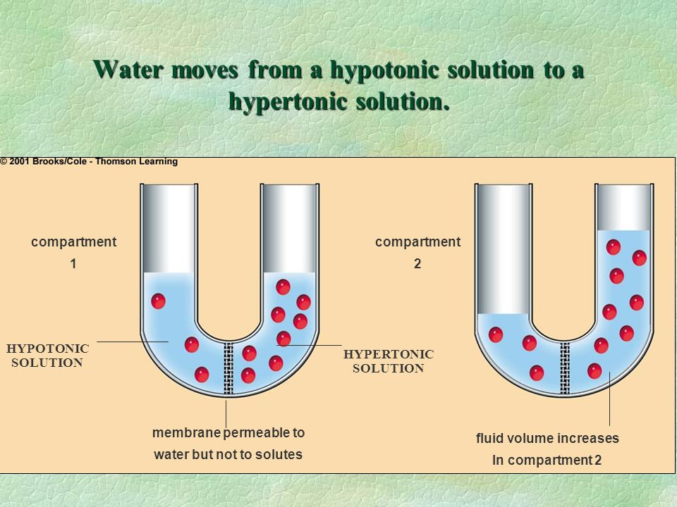 Water moves from a hypotonic solution to a hypertonic solution.