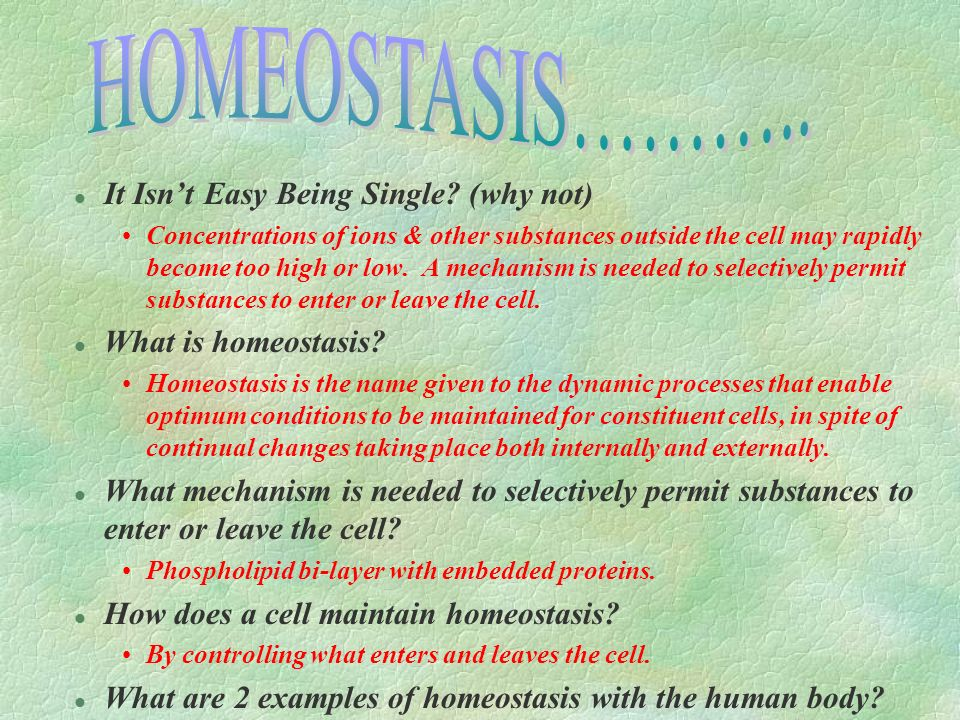 HOMEOSTASIS……….. It Isn't Easy Being Single (why not)