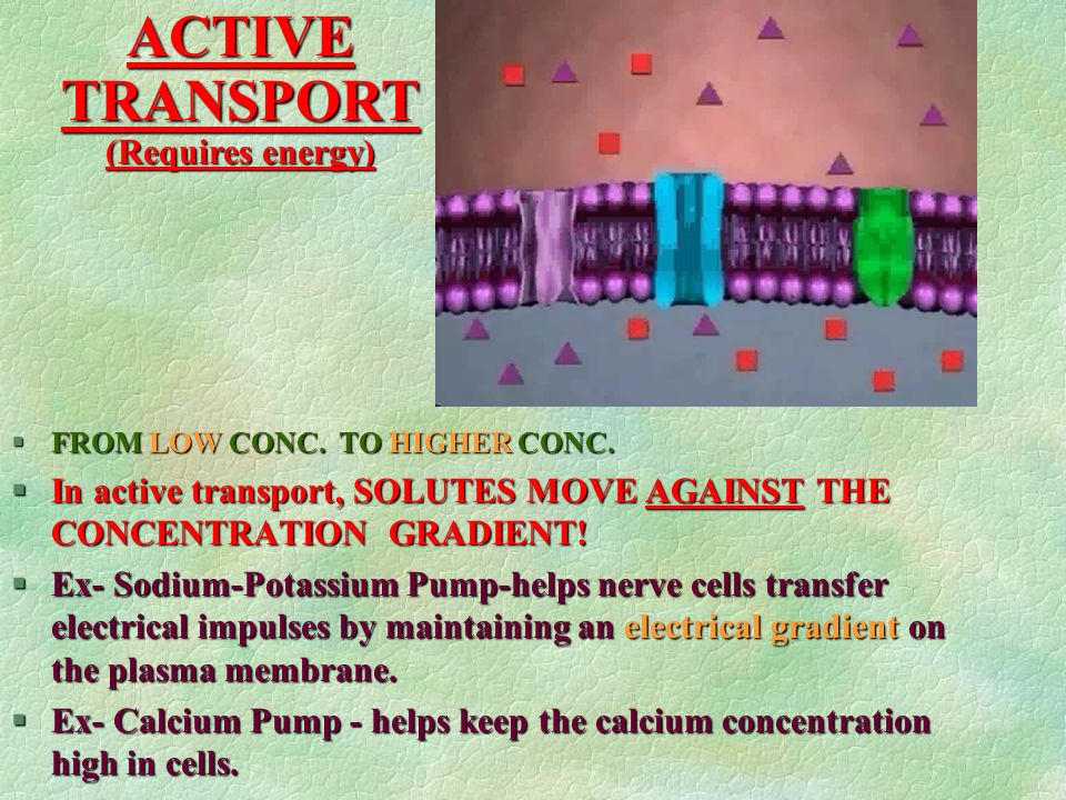 ACTIVE TRANSPORT (Requires energy)