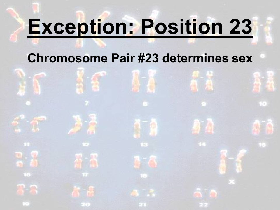 Chromosome Pair #23 determines sex