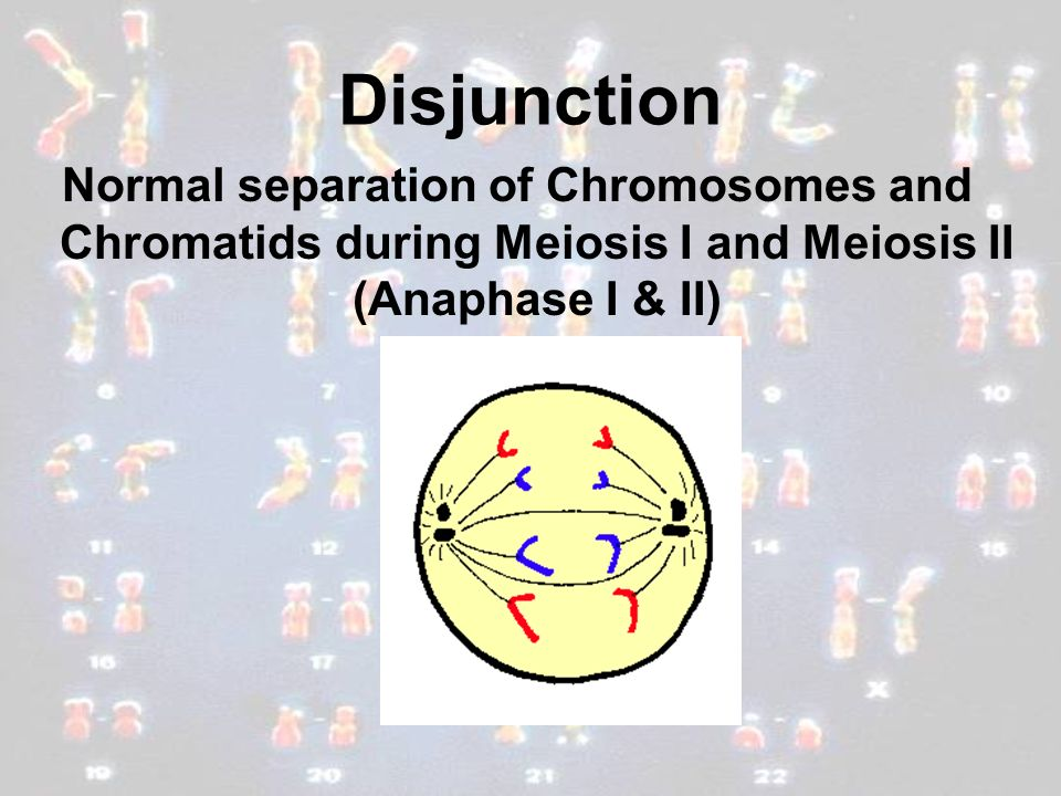 Disjunction Normal separation of Chromosomes and Chromatids during Meiosis I and Meiosis II (Anaphase I & II)