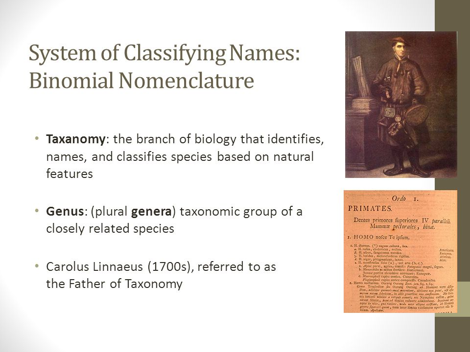 System of Classifying Names: Binomial Nomenclature