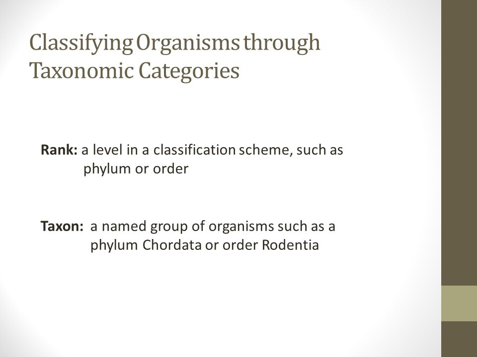 Classifying Organisms through Taxonomic Categories