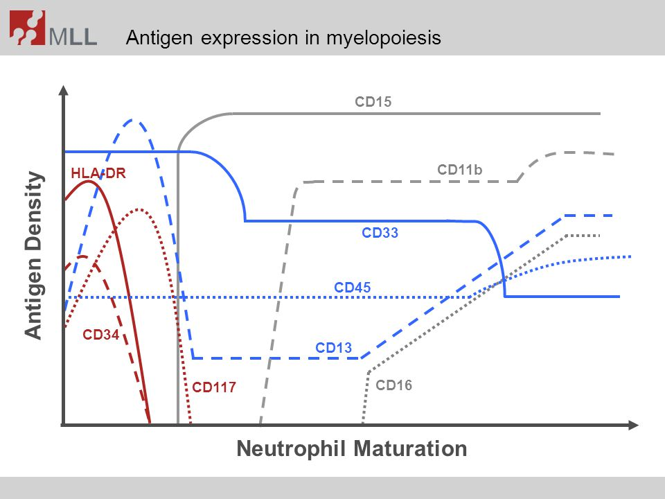 Neutrophil Maturation