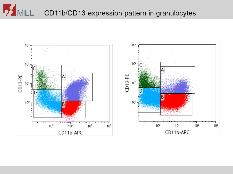 CD11b/CD13 expression pattern in granulocytes