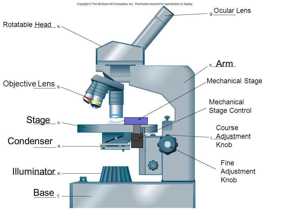Arm Stage Condenser Illuminator Base Objective Lens Ocular Lens