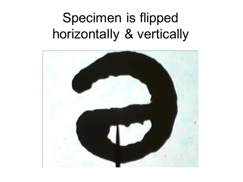 Specimen is flipped horizontally & vertically